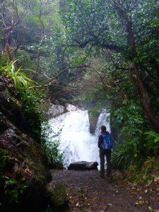 Sharplin Falls