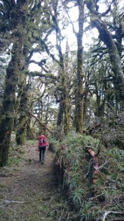 Tramping through ancient beech forest - day 1